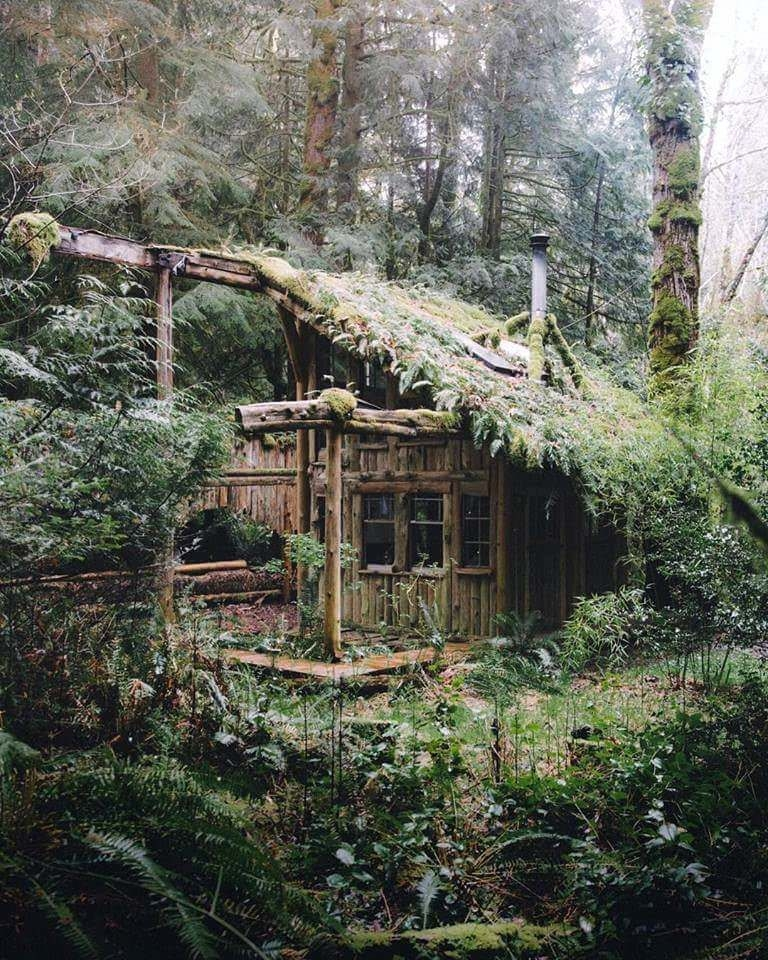 forest cabin in washington state in 2019 outdoor survival Cabins Washington State