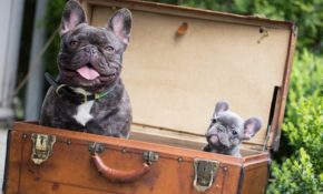 tips for flying with a puppy in cabin vitalchek blog Flying With A Dog In Cabin