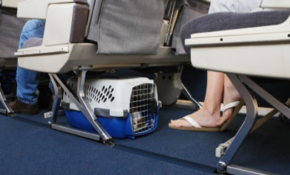 travel for animals Flying With A Dog In Cabin