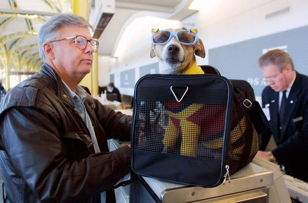 travelling with pets which airlines take dogs and cats on Flying With A Dog In Cabin
