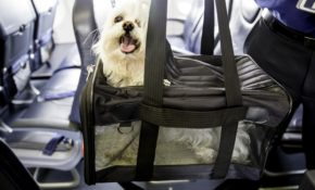 united airlines bans dozens of breeds of pets from flying Flying With A Dog In Cabin