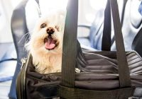 american airlines pet travel policy Flying With A Dog In Cabin