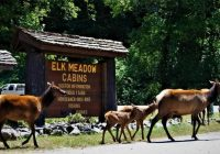 elk meadow cabins in northern california are absolutely dreamy Elk Meadow Cabins
