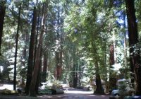 scenery picture of big sur campground cabins tripadvisor Big Sur Camping Cabins