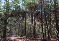 these 10 genuinely haunted forests in texas will terrify you Sam Houston National Forest Cabins
